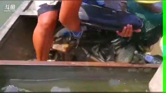 微山湖捕鱼武工队发布了一个斗鱼视频2017-09-26