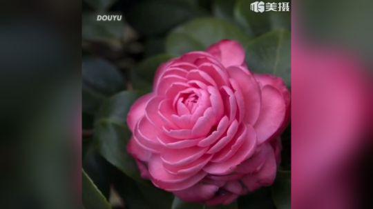 牡丹枉用三春力,开得方知不是花。