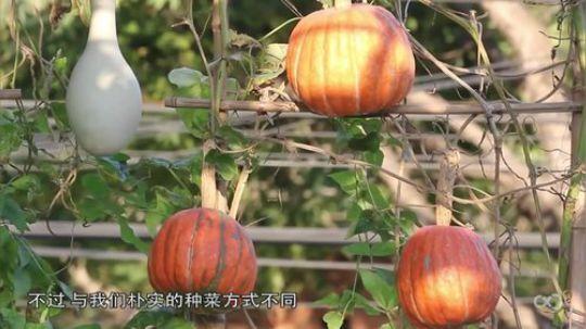 国外发明摩天轮种植园,一次能种80种蔬菜,想吃什么种什么