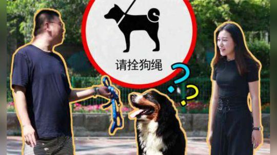 出门遛狗拴绳,不仅是保护他人,也保护了狗狗。一根牵引绳不仅可以很大程度上减少狗伤人事件的发生,同时也降低了狗狗误食、车祸和丢失的几率。这次我们就来到街头,给遛狗不拴绳的路人们送牵引绳啦!来看看他们到底为什么遛狗不拴绳呢?