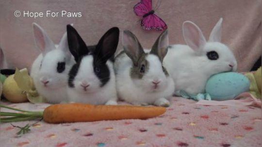 【希望之爪】拯救一窝无家可归的小兔兔